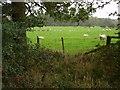 NZ0166 : Pasture, near Aydon. by Bill Cresswell