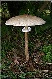 TQ4595 : Fabulous Fungus! by Glyn Baker