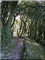 SX9065 : Path on Chapel Hill, Torquay by Derek Harper
