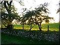 NY6530 : Farmland near Milburn by Stephen McKay