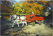 NJ9304 : Putting the Horse Before the Cart by Colin Smith