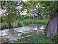 SJ6249 : Sound: pond beside footpath near Whitegate Farm by Mike Harris