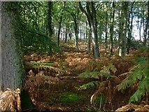 SU2115 : Islands Thorns Inclosure by Hugh Venables