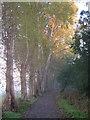 SX9390 : Path beside Mill Race, Duck's Marsh, Exeter by Derek Harper