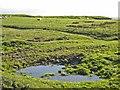 NY9780 : Rough grazing near Great Bavington by Oliver Dixon