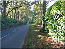 SU1012 : The road to Cranborne from Alderholt Dorset by Clive Perrin