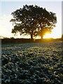 SU7248 : Frosty dawn, South Warnborough by Hugh Chevallier