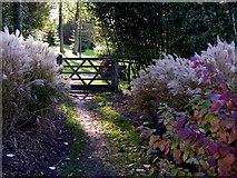 TL8425 : Arboretum path by Simon Leatherdale
