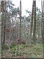 NT0441 : Shiels Wood by Richard Webb