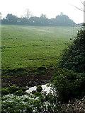 ST7693 : Field by Holywell Farm by Linda Bailey