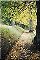 NH6544 : Autumnal path, Tomnahurich Cemetery by Derek Brown