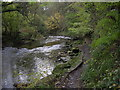 NZ2680 : River Blyth Humford Woods by george hurrell