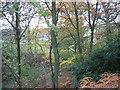 NY6664 : Plantation above The College Farm by Les Hull
