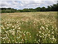 TG1432 : Wetland near Mannington Hall by Philip Halling