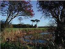 TA3622 : Rysome Garth, Holmpton by Paul Glazzard