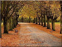 ST5673 : Promenade in Clifton by Linda Bailey