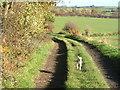 SK3116 : Gorse Lane by cris sloan