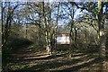 TM1550 : Rede Wood, Henley by Bob Jones