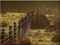 SE8097 : Wet Fence in Sunshine. by Steve Partridge