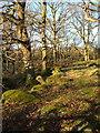 SX5381 : Woodland at Standon Steps by Derek Harper