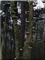 SE7894 : Fungi on Tree in Cropton Forest. by Steve Partridge