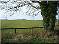 ST8289 : Tumuli beside the entrance to Park Wood Farm by Philip Halling