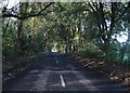 TR3252 : Tree covered lane. by Nick Smith