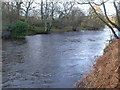 NZ0999 : River Coquet at Slidden Braes by Derek Harper