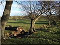 NU1000 : Stream near Throat Wood by Derek Harper