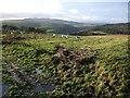 NU0900 : Field near Healey by Derek Harper