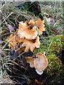 NU0900 : Fungi by Derek Harper