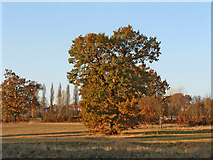 TQ3095 : Oakwood Park, N14, in Autumn by Christine Matthews