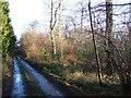 NZ1199 : Cockshot Wood by Derek Harper