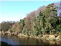 NU2406 : River Coquet at Warkworth by Derek Harper