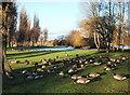 TA0527 : Pickering Park, Hull by Paul Glazzard