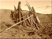 NT2486 : Driftwood windbreaker we built! by Josef Wilson