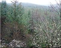 NN9147 : Treetops by Lis Burke