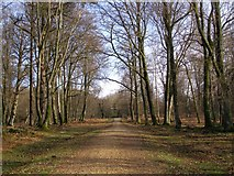 SU2609 : Gravel track in Highland Water Inclosure, New Forest by Jim Champion