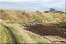 NO5000 : Fife coastal path by Jim Bain