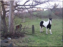 SE1421 : Horses in field called Bowling Alley, Rastrick by Humphrey Bolton