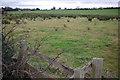 SK3031 : Farmland north of Findern by Stephen McKay