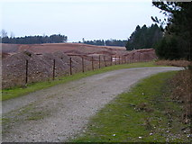SJ9715 : Quarry extensions at Warren Hill, Cannock Chase by Jack Barber