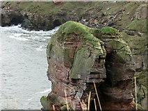 NT9955 : Needles Eye, North of Berwick-upon-Tweed by Lisa Jarvis