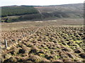 NS7233 : Spirebush Hill by Chris Wimbush