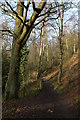SO8282 : Footpath through the wood on the western slopes of Kinver Edge by Philip Halling