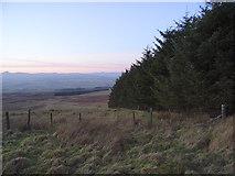 NN8403 : Forestry, Glentye Hill by Andrew Smith