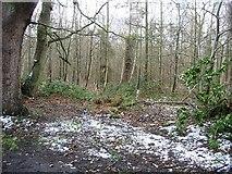 TR1958 : Oldridge Wood from Swanton Lane by Nick Smith