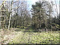 SK3062 : Farley Moor - Woodland Path by Alan Heardman