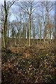 SO7981 : Coldridge Wood by Philip Halling