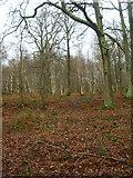 TQ8622 : Flatroper's Wood by Simon Carey